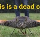 死んだ飼い猫をドローンに改造した男のその後…  鼠やダチョウや鮫もドローンに。アナグマは潜水艦