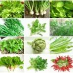 Kochan's ベランダ菜園BLOG - マンションガーデニング、家庭菜園、仙台グルメ、キャンペーン情報等