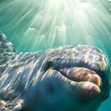 『【イルカの集団 Dolphin Collective】 皆さんの支援を求める  by Meline Lafonte』の画像