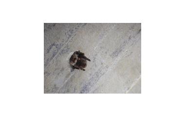 『コウモリの秋がやってきた』の画像