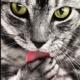 ネコには「お気に入りの死体」があることが判明