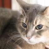 『【飼育用品貸与】猫の預りボランティア大募集!』の画像