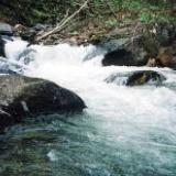 2006年の釣り 6月6日 片品川水系のサムネイル