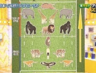 外国人「日本の番組がラグビーのポジションを動物で説明してる…」