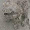 【子ネコ】毛がボロボロに汚れた子猫を見つけた。保護した → こうなった…