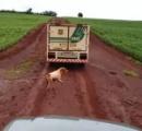 犬が亡き主人を追う、霊柩車を16kmも追随
