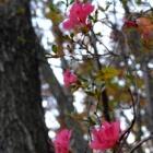 『季節外れの開花』の画像