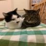 撮影の時の猫たち