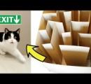猫に迷路を解かせる「ネコ迷路」を作ってみた
