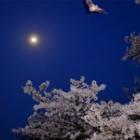 『蝠月花』の画像