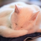 『KAMLAN50mmF1.1による猫① 2021/02/15』の画像