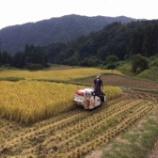 『稲刈り、天日干しの脱穀が終わりました』の画像