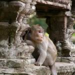 人間は猿から進化したって言うじゃん