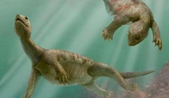 2億2千年前のカメには甲羅がなかった