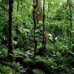 ジャングルで行方不明になった兵士、23日ぶりに発見 「カメを生のまま食べ、ラップを歌って生き延びた」 南米コロンビア