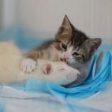 『保護猫たちを世話するネズミたち』の画像