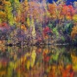 『紅葉狩り』の画像