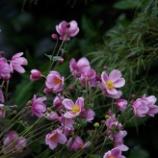 『10月の庭の花;東大和市』の画像