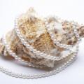 珍珠粉讓你快速美白