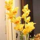 『花色も豊富な【グラジオラス】の育て方と問題点・咲かせて楽しむ方法』の画像
