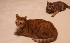 猫のカワイイ写真を撮ろうとしたら