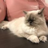 『【大須の猫カフェ】Puchi Marry(ぷちまりー) 名古屋大須店に行ってきた感想【猫ちゃん画像もあるよ】』の画像