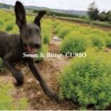 『今週の1枚(12)「Sweet & Bitter/CURIO」』の画像