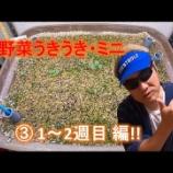 『エスペックミック 栽培キット 野菜うきうき・ミニ �1〜2週目 編』の画像
