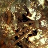 『クマの母の目の前で仔グマたちを射殺』の画像