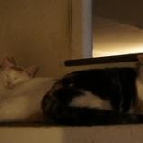 『猫棚』の画像