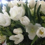 『春がきた春がきた』の画像
