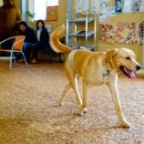 『青森産ヒバのウッドチップ100%のドッグラン 犬が走り回っても滑りません!』の画像
