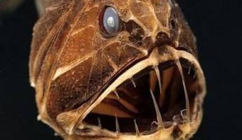 【深海の不思議満載】深夜の深海生物スレ(画像あり)