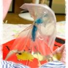 『おもちゃの金魚を持ってあーちゃんが「ちゃちゃ・の」と言っていたそうです!』の画像