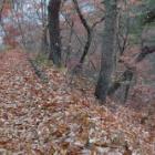 『冬枯れ落ち葉の路』の画像