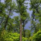『世界の樹木の危機と私たちができること』の画像