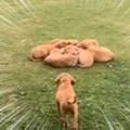 子イヌたちが庭でくっついて寝ていた。ボクも仲間に入れて~♪ → みんなでこうなります…