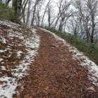『落葉ロードが・・・雪道に♪ 広島県民の森!!』の画像