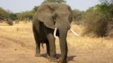 ゾウ「遅いです、攻撃力ゼロです、気性穏やかです、草食です」←こいつがサバンナで天下とった理由