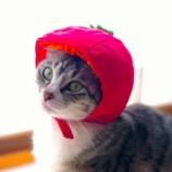 『トマトちゃん』の画像
