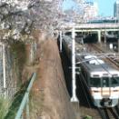 桜と名鉄とJR