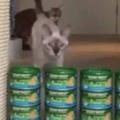 猫缶で壁を作ってみた。ネコたちはどれくらいまで飛び越えられる? → やってみたらこうなった…