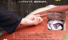 【日本のマナー】   車のボンネットを叩いて 猫がいるか確認しよう。   海外の反応