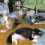 猫が集まり、猫会議中!?