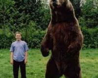 【画像有】人間が熊には絶対勝てないと0.1秒でわかる画像wwwwwwwwwwwwww