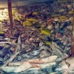 【中国】ガラパゴス諸島で絶滅危惧種サメ密漁の中国人20人に有罪判決!全員刑務所へ [海外]