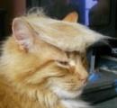 「トニャンプ大統領だ!」 フサフサのリーゼント猫が米大統領に似ていると話題