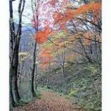 『秋よ〜来い』の画像
