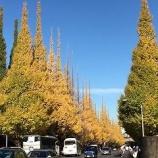 『いちょう並木』の画像