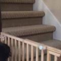【イヌ】 階段に「ペットゲート」をつけてみた。これで犬は2階に行けないぞ! → こうなる…